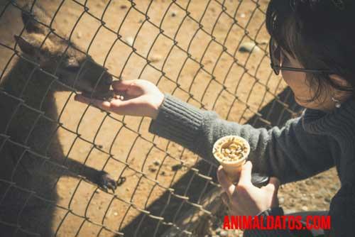 porque no debo alimentar a los animales del zoológico