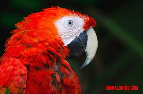 5 animales con sonidos agudos