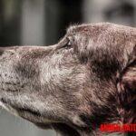 Alzheimer en perros: que es, reconocer los síntomas y como tratarlo