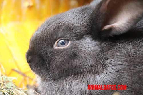 conejo con ojos llamativos
