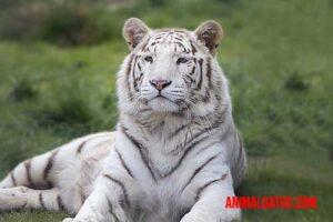 los 5 animales más bonitos del mundo