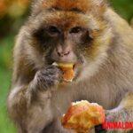 Que comen los monos, guía básica para conocer su alimentación