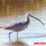 Las 5 aves con el pico más largo del mundo, algunos lucen increíbles