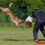 Que son condroprotectores para perros y en que casos se deben usar
