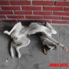 los perros tienen ombligo
