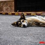 En caso de desastres naturales, ¿Cómo puedo ayudar a los animales?