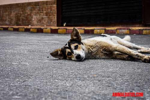 perro en desastre natural