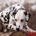 ¿Por qué castrar o esterilizar a un perro? ¿Qué ventajas y desventajas tiene?