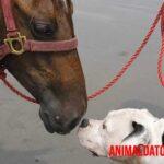Semejanzas entre el perro y el caballo que los vuelven los mejores amigos del ser humano