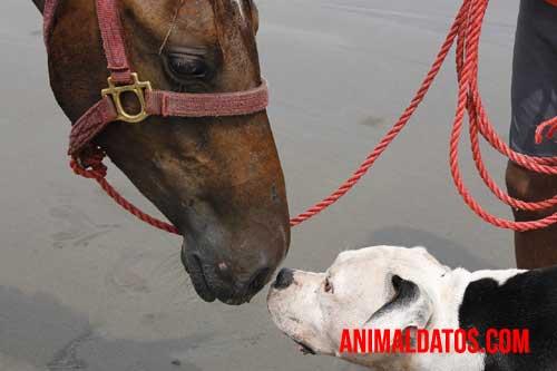 semejanzas entre el perro y el caballo