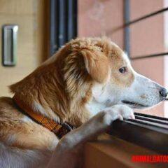 un animal puede morir de tristeza