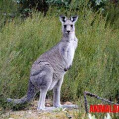5 animales que caminan en dos patas