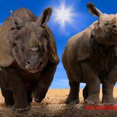 Los animales han cambiado de forma debido al cambio climático