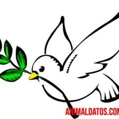 La paloma blanca es considerada el símbolo universal de la paz