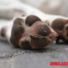 La muerte de un animal puede afectar demasiado a una persona.