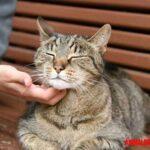 5 señales que tu gato es feliz viviendo contigo