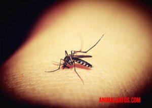 Existen una enorme cantidad de tipos de mosquitos en el planeta