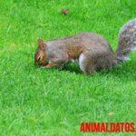 5 animales que recolectan comida para el invierno (no todos hibernan)