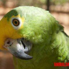 Si tendrás un ave en cautiverio, tendrás que cuidar también su pico.