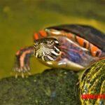 Lista de los accesorios para tortugas indispensables si la tienes en cautiverio