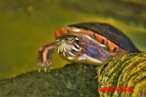 Que no te falten estos accesorios para tortugas