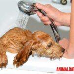 5 errores cometidos al bañar a un perro