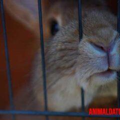 El estrés en conejos puede ser provocado por gran cantidad de estímulos.