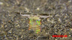 gusano bobbit