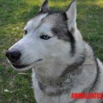 ¿Perjudico a mi perro tenerlo como guardián de la casa?